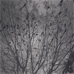 Birds. So many birds...