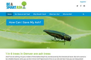 smart-ash-website-design-seo-featured