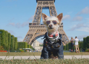 Dog at Eiffel Tower