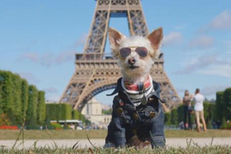 Dog at Eiffel Tower