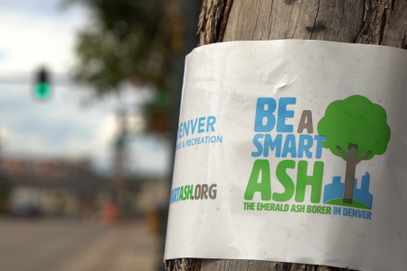 Be a Smart Ash ribbon around a tree